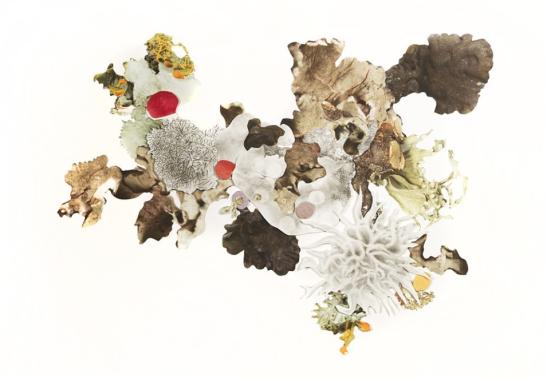 Artificial_Lichen_colony_Collage_IV